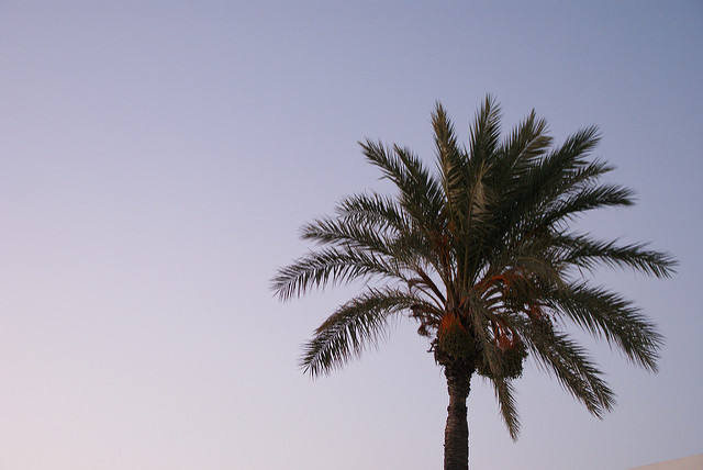 Palm by travelling.the.world