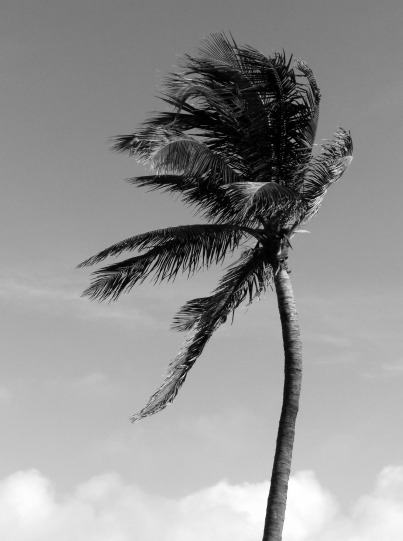 palm tree by Vankuso